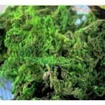 Сухой мох натуральный