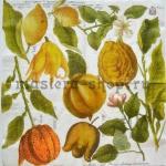 Салфетка Ботанический атлас: Экзотические фрукты
