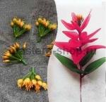 Внутренние соцветия пуансетии зелено-желтые