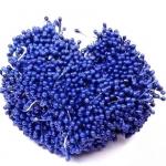 Тычинки средние синие (2-3 мм)