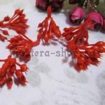 Внутренние соцветия пуансетии красные