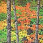 Салфетка Осенний леc